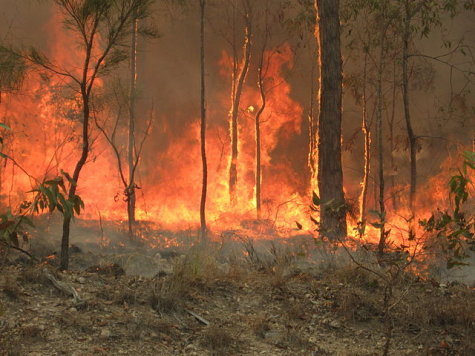 Forests and tress burn as wildfires tear through Australia
